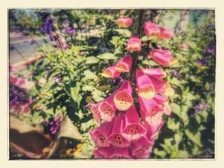 Flowers 2017