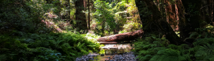 Muir Woods 2017 | Fate Of 8 O 8 mediA ©