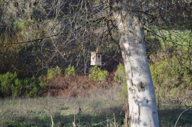 Bird House | Rancho San Antonio | fateof808.com
