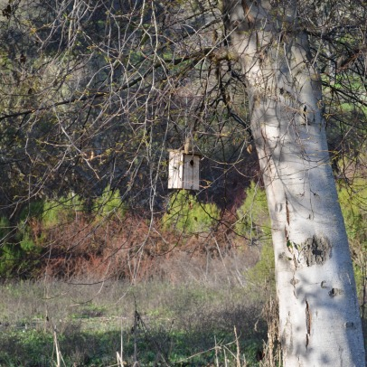 Bird House | Rancho San Antonio | fateof808.com