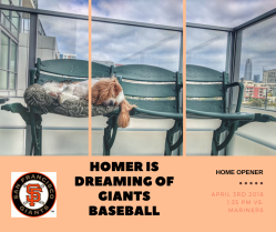 HOMER 2018 SF GIANTS BASEBALL